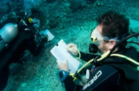 Evelyne and Lionel during a transect dive - Tumbak